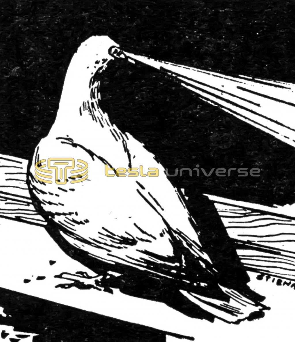 Illustration of Tesla's Pigeon